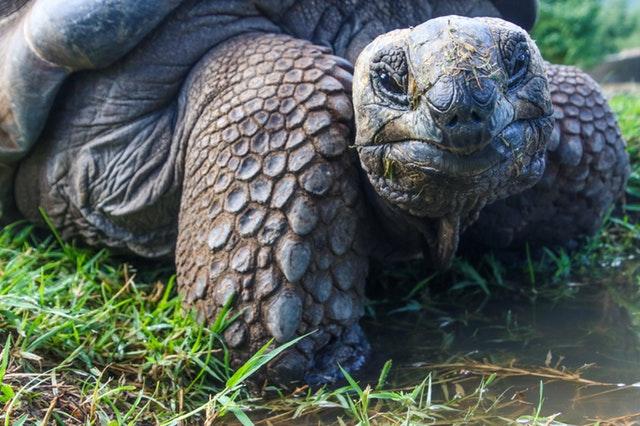 tranquil tortoise